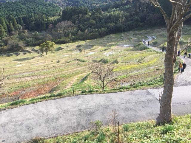 Japanese Farm lands